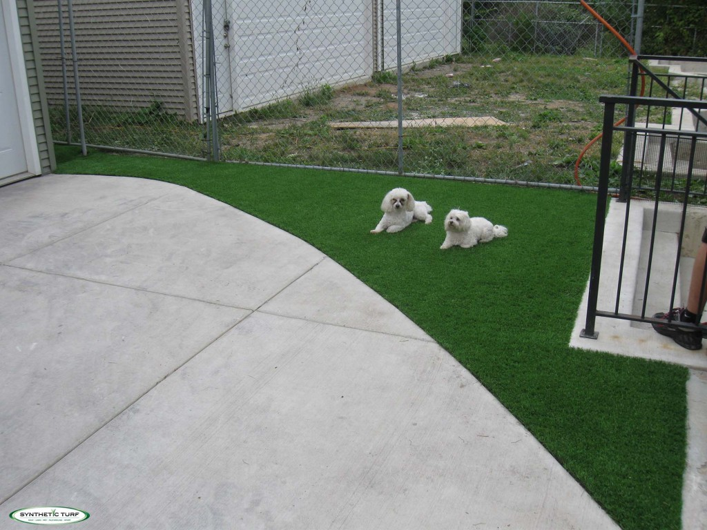 artificial turf dog runs pet turf synthetic turf of illinois